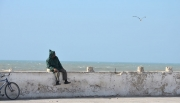 Gallery_Essaouira_0016