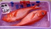 Gallery_TsukijiMarket07